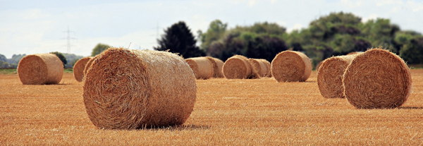 Straw Bales in field showing harvest